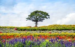 Einsamer Baum im Blumengarten Stockbild