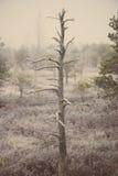 Einsamer Baum im eisigen Wintersumpf - gealtertes Foto Stockfoto