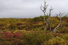 Einsamer Baum im Herbst Stockfotos