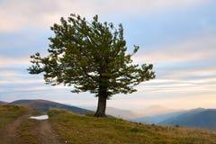 Einsamer Baum im Herbstberg Stockbild