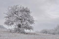 Einsamer Baum im Hoar-frost Lizenzfreie Stockfotografie