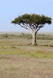 Einsamer Baum im Mara, Kenia Lizenzfreies Stockfoto