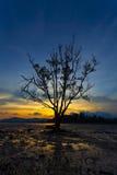 Einsamer Baum im Meer im Sonnenuntergang Stockfoto
