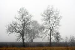 Einsamer Baum im Nebel Stockbild