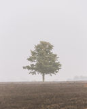 Einsamer Baum im Nebel Stockbilder