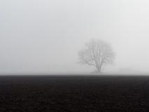 Einsamer Baum im Nebel Lizenzfreies Stockfoto