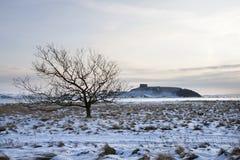 Einsamer Baum im Schnee Stockfotos