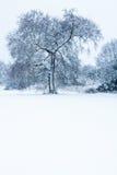 Einsamer Baum im Schnee Lizenzfreie Stockfotografie