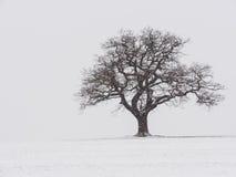 Einsamer Baum im Schnee Stockbilder