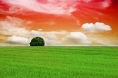 Einsamer Baum im Sonnenuntergang Stockbilder
