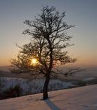 Einsamer Baum im Sonnenuntergang Lizenzfreies Stockbild