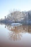 Einsamer Baum im Winter stockfoto