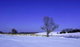 Einsamer Baum im Winter Lizenzfreies Stockfoto