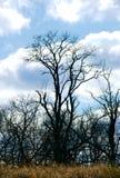 Einsamer Baum im Winter Lizenzfreies Stockbild