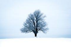 Einsamer Baum im Winterlandschaftsbaum in der Winterlandschaft Stockfoto