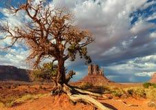 Einsamer Baum kämpft für das Leben in der Wüste Stockfotos