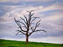 Einsamer Baum mit bewölktem Hintergrund Stockbilder