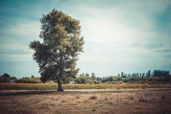 Einsamer Baum mitten in dem Feld stockbild