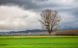 Einsamer Baum nach dem Sturm Stockfotos