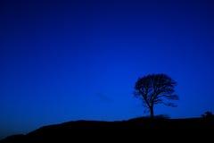 Einsamer Baum nachts Stockfotografie
