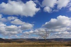 Einsamer Baum nahe den Weinbergen und der Himmel im Vorfrühling Lizenzfreie Stockfotos