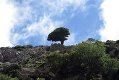 Einsamer Baum nahe einer Spitze von Zas-Berg Lizenzfreie Stockfotos