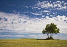 Einsamer Baum oben auf Hügel Lizenzfreies Stockbild