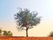 Einsamer Baum am Rand der Steigung Stockfotografie