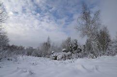 Einsamer Baum in schöne schneebedeckte Bäume Stockfoto