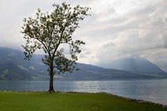 Einsamer Baum in See Thun, die Schweiz Lizenzfreie Stockfotos