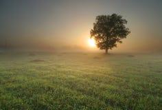 Einsamer Baum am Sonnenaufgang Lizenzfreies Stockfoto