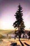 Einsamer Baum am Sonnenaufgang Stockfotografie