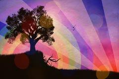 Einsamer Baum am Sonnenuntergang Stockfotos