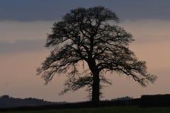 Einsamer Baum am Sonnenuntergang Lizenzfreies Stockfoto