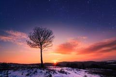 Einsamer Baum am Sonnenuntergang Stockbild