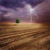 Einsamer Baum und Blitz Stockbild