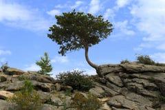 Einsamer Baum und Busch auf dem Felsen stockfoto