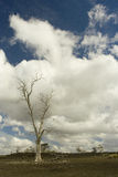 Einsamer Baum unter bewölktem Himmel Stockfotos