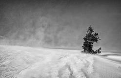 Einsamer Baum unter starkem Winterwind in den Bergen Lizenzfreies Stockfoto