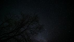 Einsamer Baum unter sternenklarem Himmel 4K TimeLapse stock video