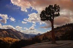 Einsamer Baum Yosemite lizenzfreie stockfotografie