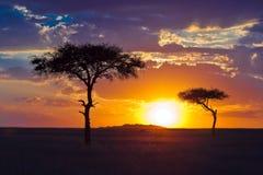 Einsamer Baum zwei auf einem Hintergrund des tropischen Sonnenuntergangs Stockfotografie