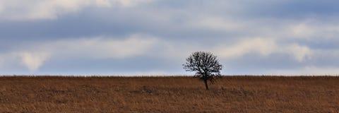 Einsamer Baumhügel stockfoto