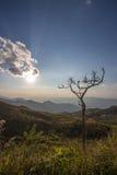 Einsamer blattloser Baum auf dem Berg Lizenzfreie Stockfotos