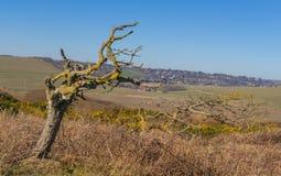 Einsamer blattloser Baum im Hintergrund der Felder und des kleinen Dorfs stockfoto