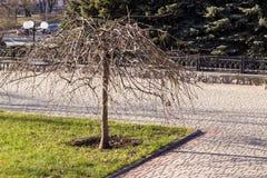 Einsamer bloßer Baum Stockfotos