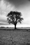 Einsamer bloßer Baum Stockbild