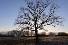 Einsamer bloßer Baum in der Winterlandschaft Stockbild