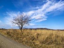 Einsamer bloßer Winterbaum entlang einer leeren Asphaltlandstraße Stockfoto