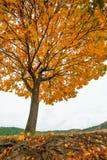 Einsamer bunter Baum und Straße Schöner Herbst stockfoto